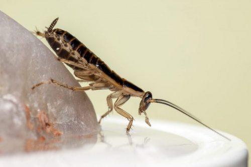 كيفية القضاء على الصراصير الصغيرة في المطبخ